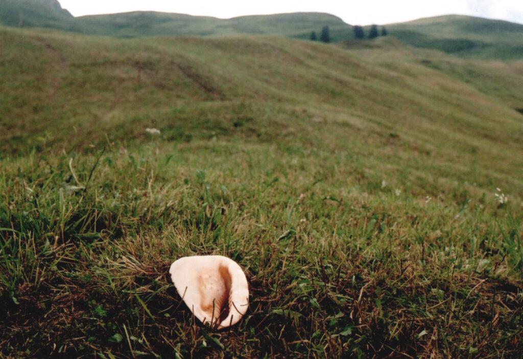 Sound Fossil I_Vibeke Mascini_01